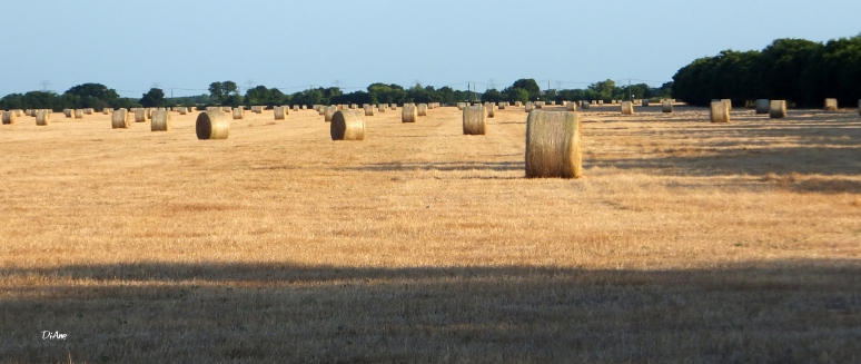 Bundles of Bales 4