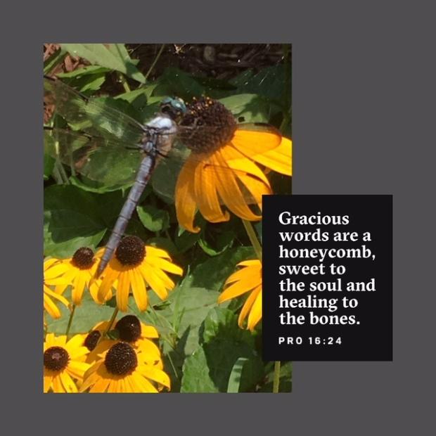 BibleLens_2018_08_18_15_47_52_5850.JPG